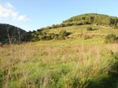 Terreno agricolo Castelsardo