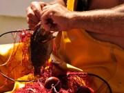 Pesca artigianale all'Asinara