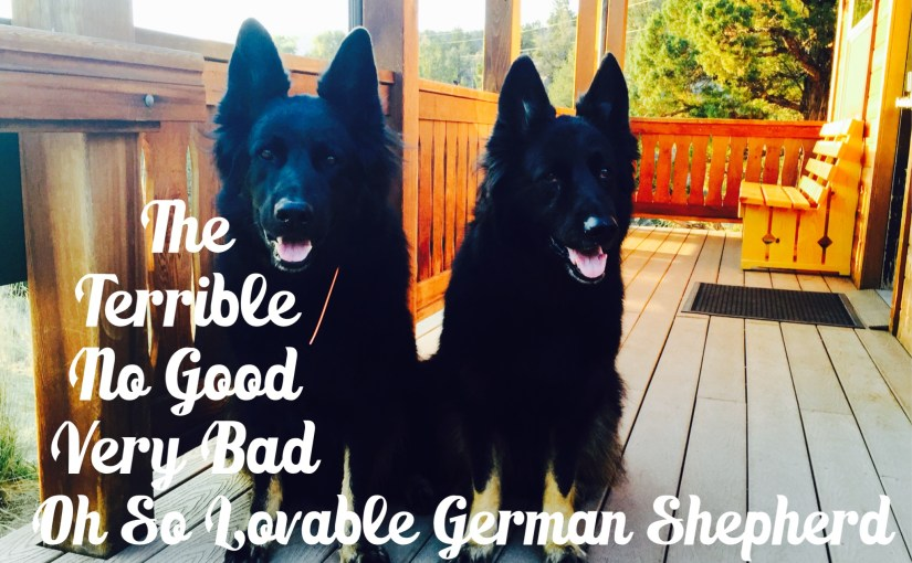 Don't Own a German Shepherd…Definitely Not Two