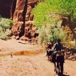 Canyon De Chelly Arizona Trail Horse Back Ride