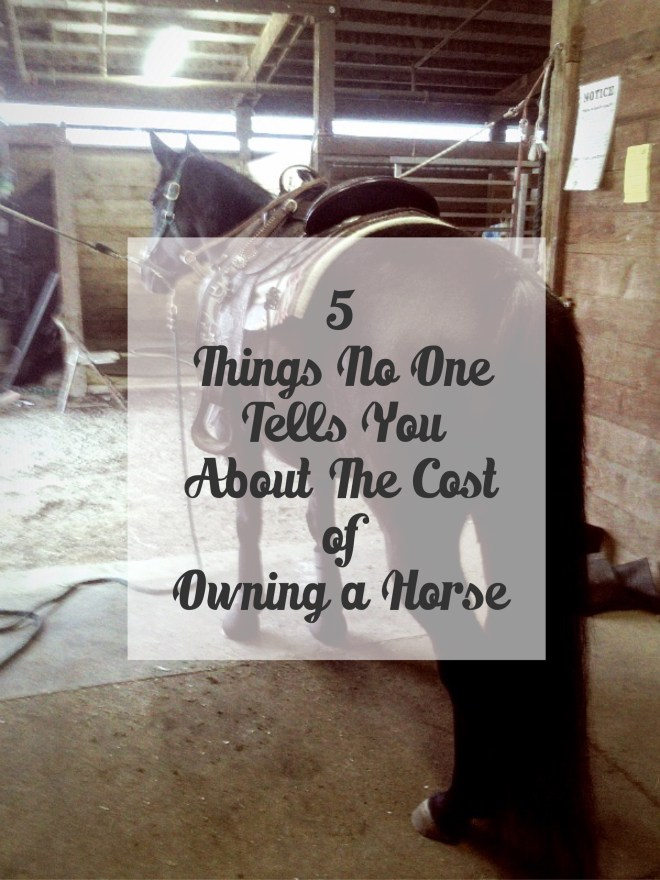 5 hidden costs of horse ownership