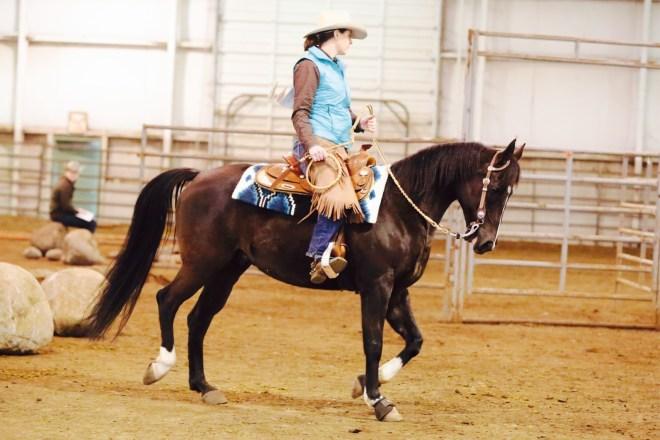 Arabian Trail horse