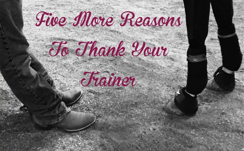 5 reasons to thank your Arabian Horse trainer