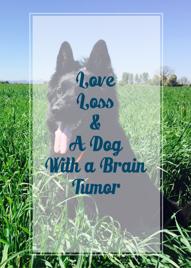 Love Loss A Dog with a brain tumor