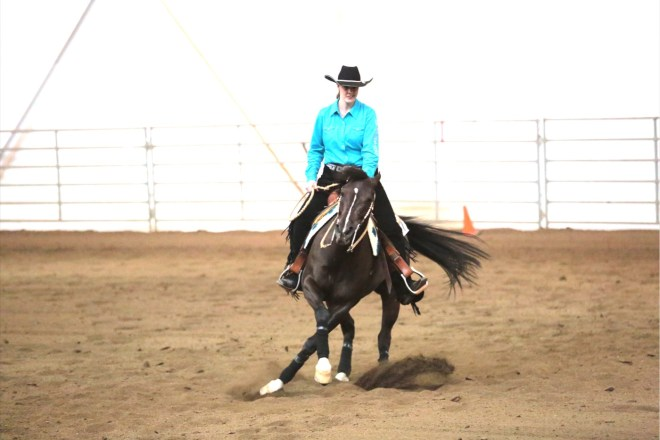 Arabian Reining Horse Spin with cross over