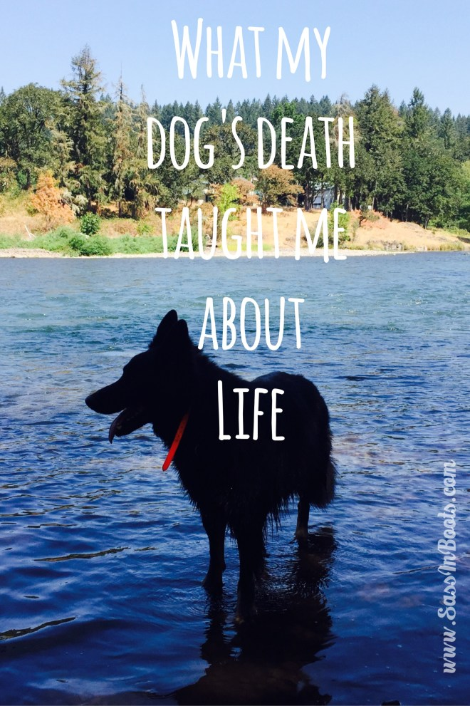 Dog Death Lessons on Life