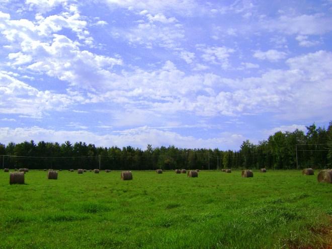 Wisconsin Hay Field