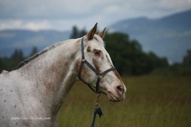 Endo The Blind Horse Appaloosa