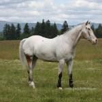 Endo The Blind Horse Listening