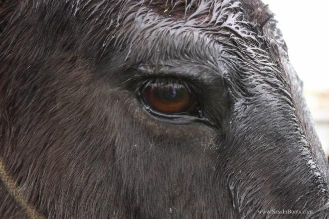 Eye of the Mule