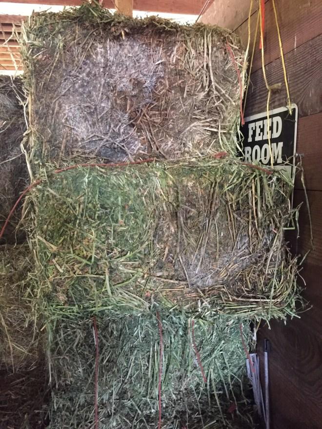 Moldy Alfalfa