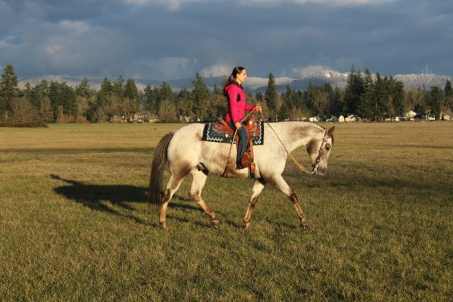 Jogging Appaloosa In Field At Sunset