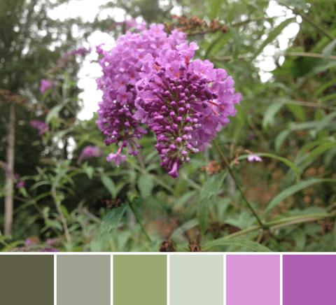 IMG_2259-palette