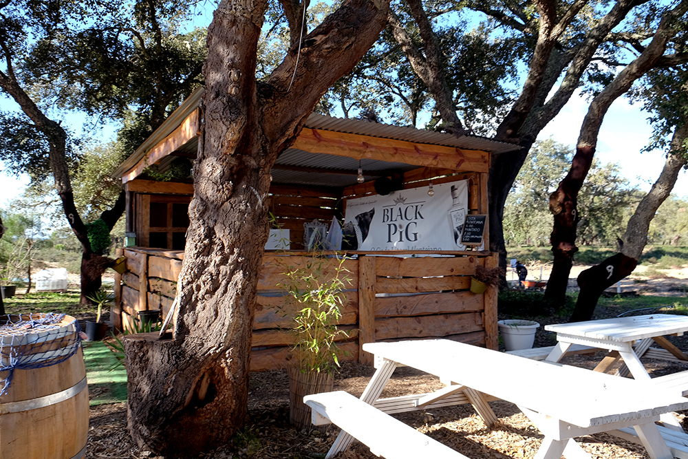 Black Pig Distillery bar ©Sated Online