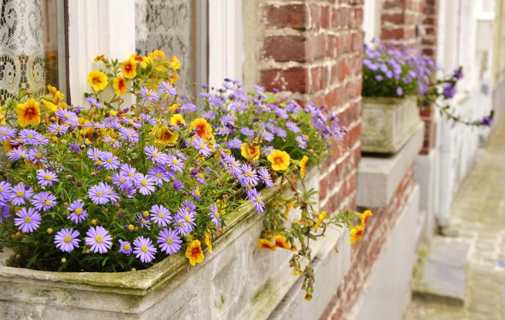Flowers in Bruges, Belgium