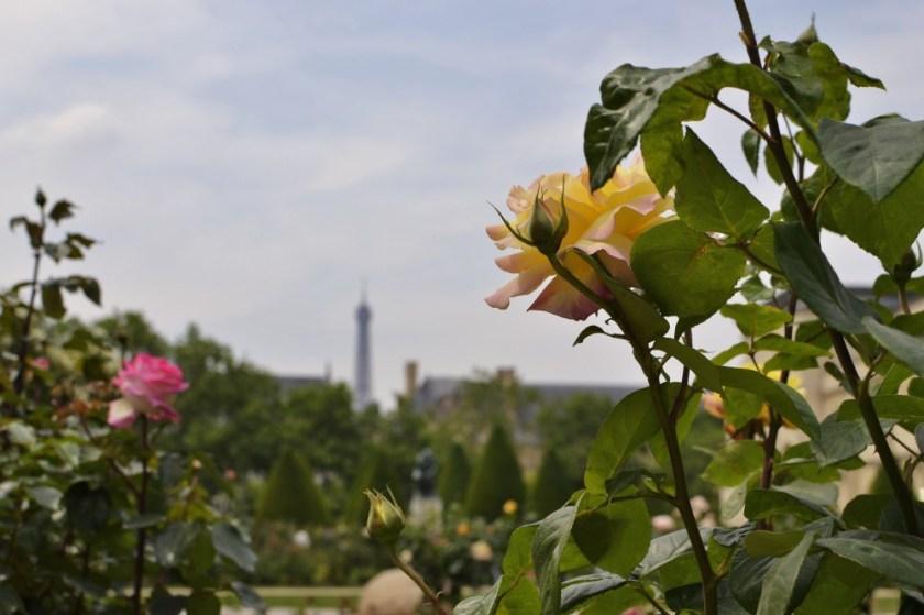 Roses at Musée Rodin, Paris, France
