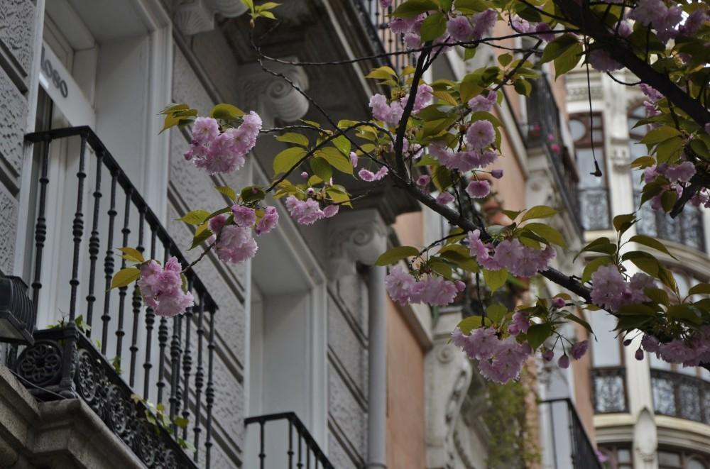 Blooms in Madrid, Spain