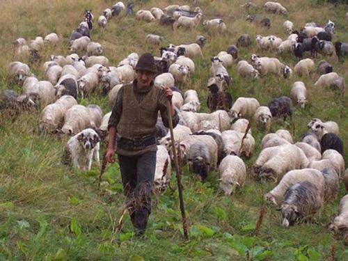 Poliţiştii locali cu ochii pe ciobanii de pe malul Someşului