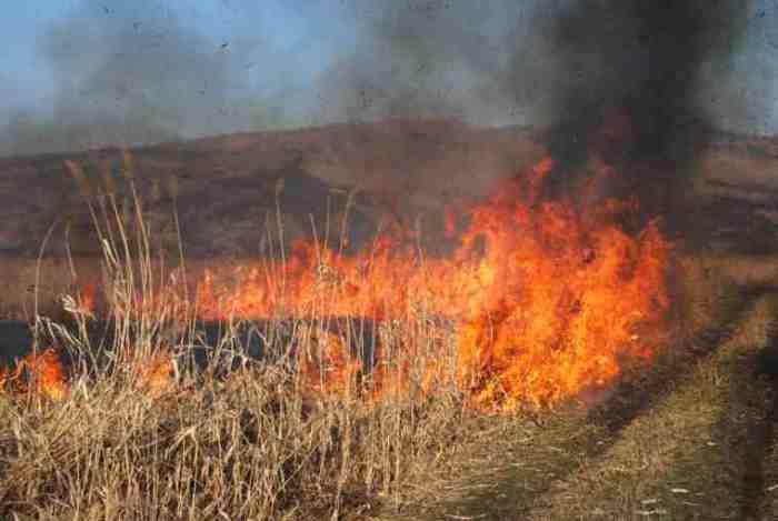 Incendii de vegetație uscată în județ. Ce spun pompierii
