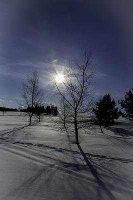 auringossa