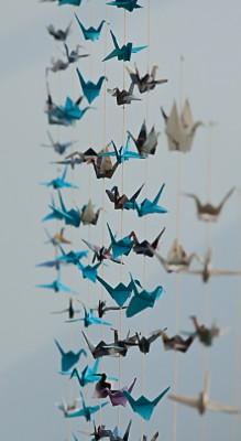 Linnut, linnut-6