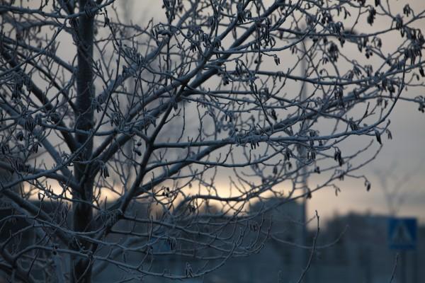 Pitsipuut