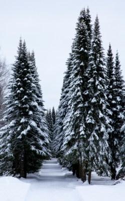 Pihlajanmarjat ja lumi_-7