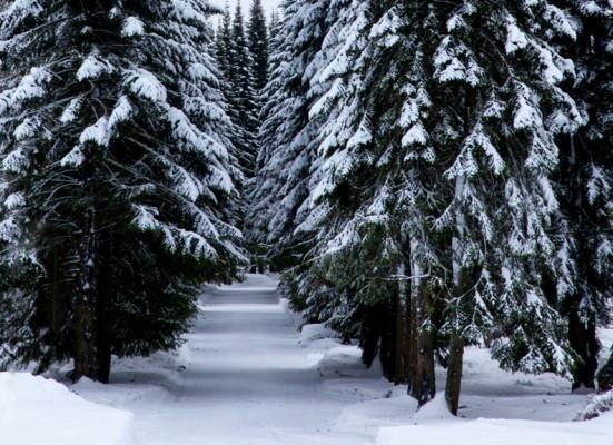 Pihlajanmarjat ja lumi_-8