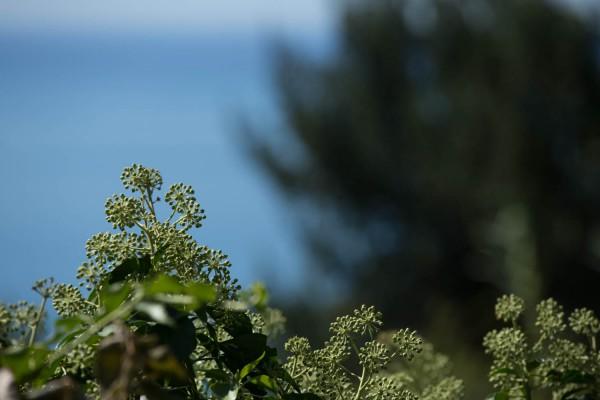 Liguriauntitled-14