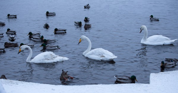 Oulujoen rannassa-3