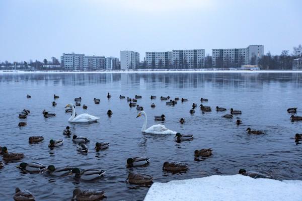 Oulujoen rannassa_
