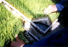 水稲用育苗培土 写真1