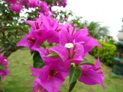 8 Jenis Tanaman Hias Bunga yang Indah dan Mudah Perawatannya