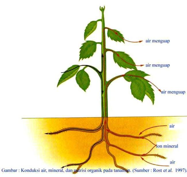Struktur Organ Pada Tumbuhan