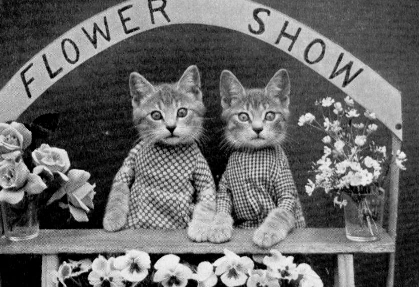 The Cat Meme Photographer From A Century Ago The Saturday