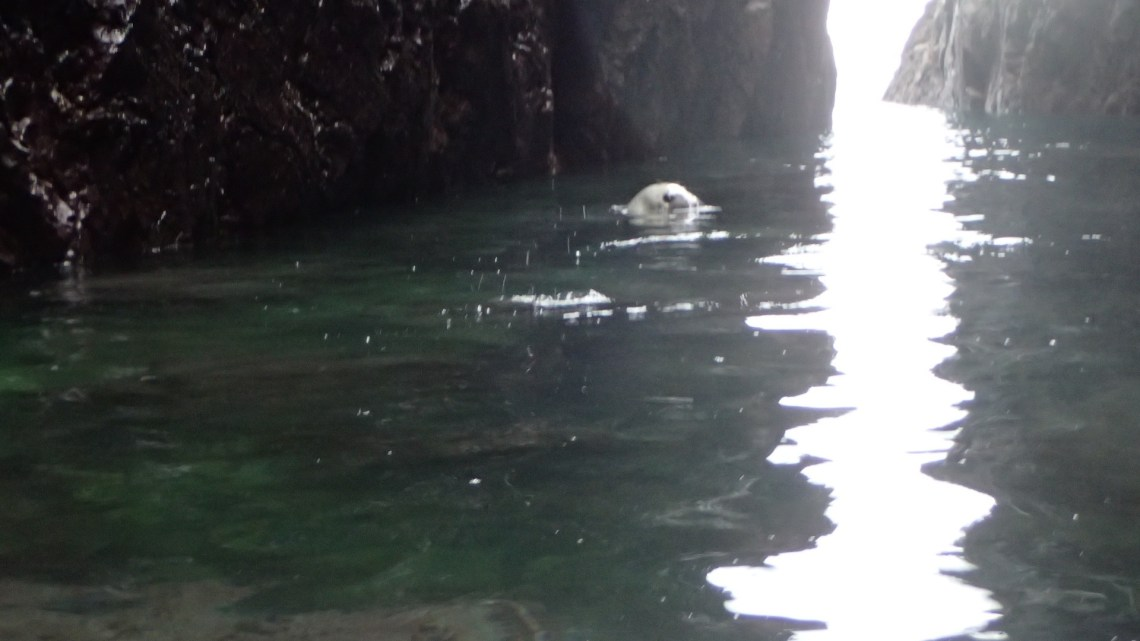 Cave seal