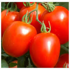 Red Tomato Seeds