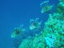 Coral reef in Obhur (photo: Ilkka Tuohela)