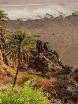 Greenery on the edge of Wa'abah Crater (photo: Martin Beuvelot)