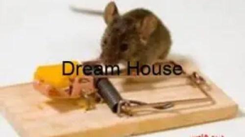 معلومات عن الفئران وأنواعها