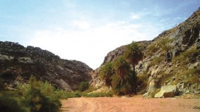 غابة الغثمة forest of al ghathma