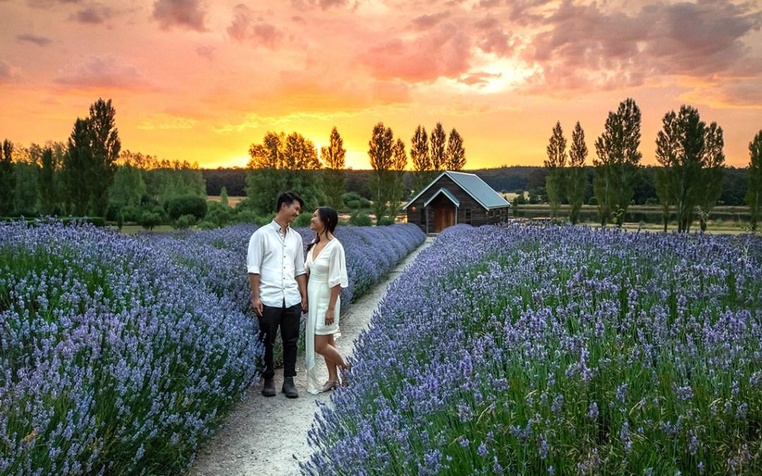 Lavender Fields…