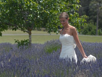 sault-weddings-gallery-summer-05