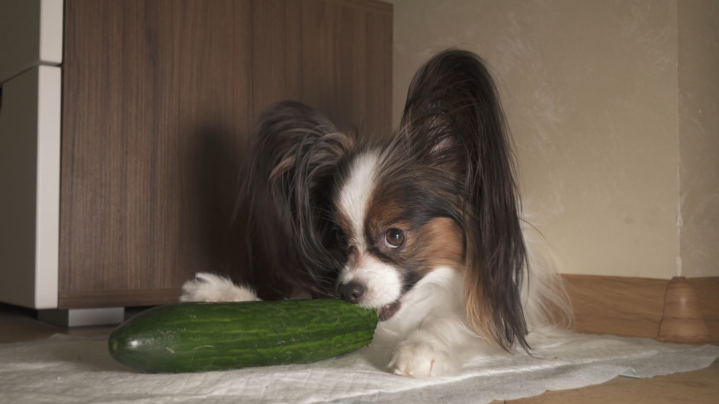 Can Dogs Eat Cucumbers? - Welcome To