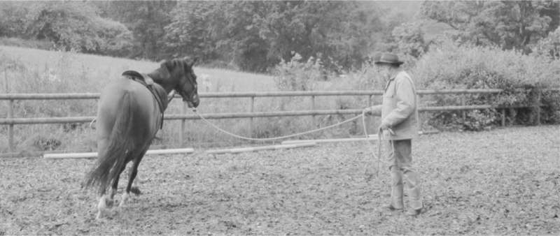 Ross Jacobs training a horse