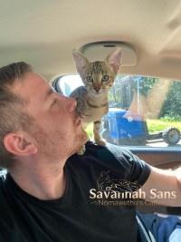 Katzenzüchter Savannah cats