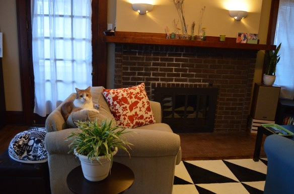 Another of the couple's cats, Honey, relaxes in front of the fireplace at their home in Wellington Heights in November 2014. (photo/Cindy Hadish)