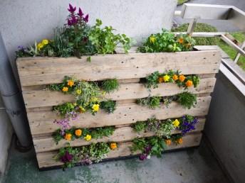 Le jardinage urbain save eat