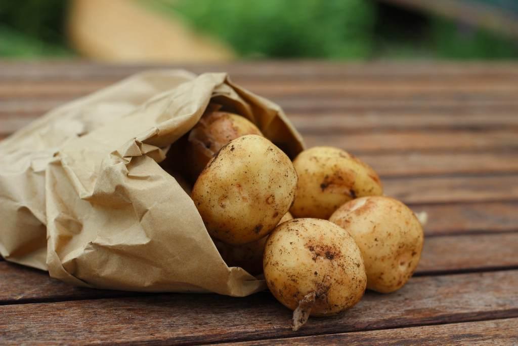 pommes de terres germées