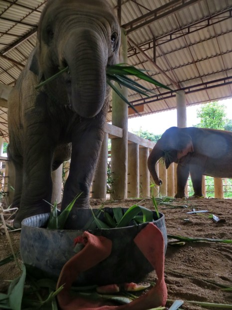 Little Dok Mai enjoys coming back to a surprise in her shelter.